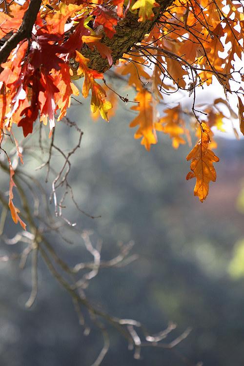 """Fotografie \""""Toulky podzimem\"""""""