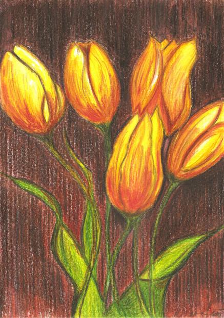 Muj Fler Tulipany Kresba Pastelky