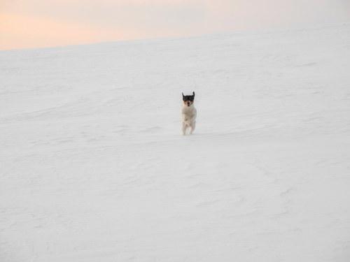 Psí radosti ... zimní procházka