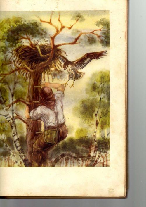 V Bělověžském pralese -Georgij Aleksejevič Skrebic
