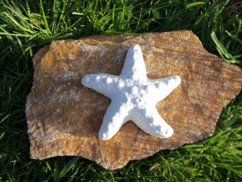Sádrová mořská hvězdice