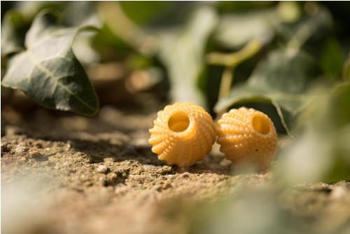 Náušnice ježovka gold