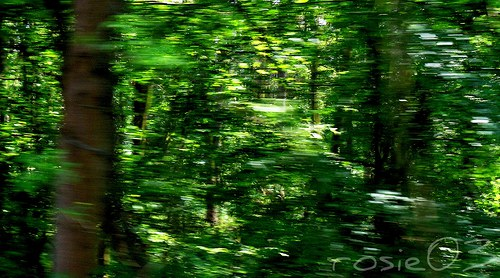 Letem lesem