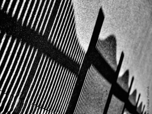 Podél plotu