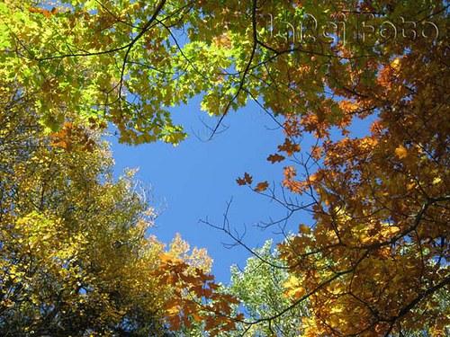 Nebe mezi listím