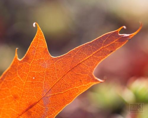 Autumn Impressions VIII - autorská fotografie
