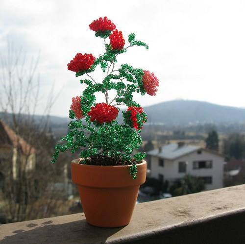 Růže v květináčku