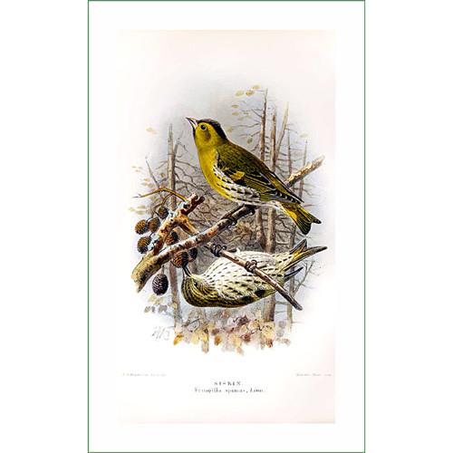 ptáci (33)  (látkový panel)