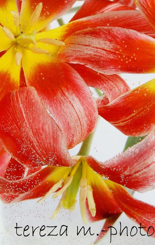 Potopená květina