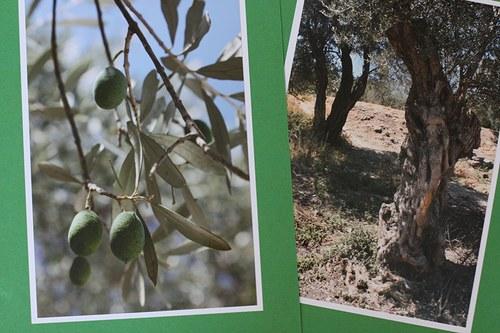 Olivový háj + záložka ZDARMA