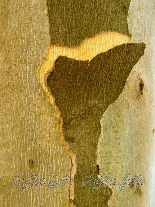 Jen tak kůra stromu