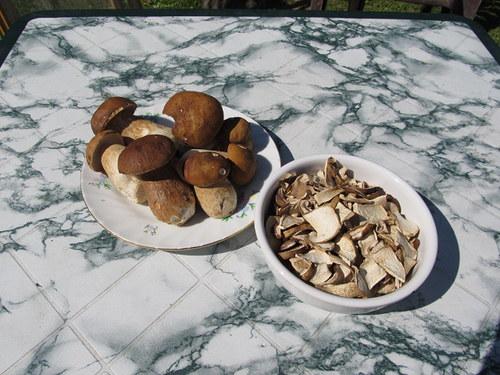 Sušené houby-hřib dubový,hřib smrkový 100 gr