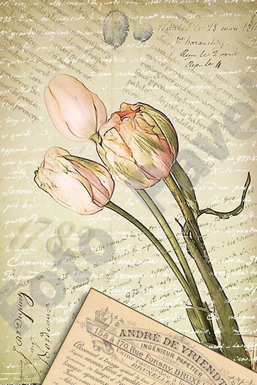 Vintage motiv - tulipán 2