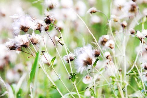 """Fotografie \""""Život v trávě\"""""""