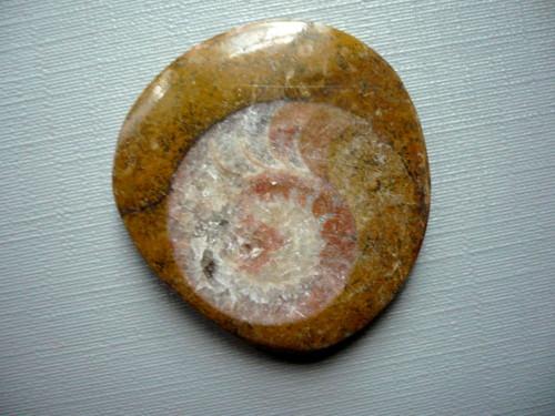 Amonit v matečné hornině 33 mm, č.18