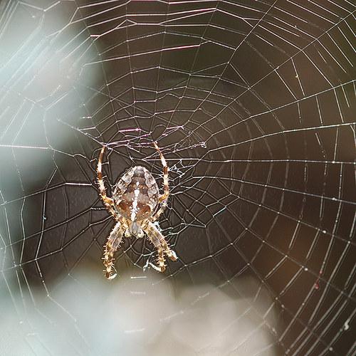Pavouk chytil dvě mouchy...
