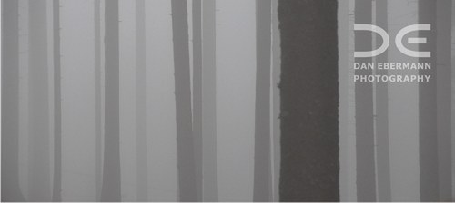 Les jak záclona, záclona jak les (30 cm)