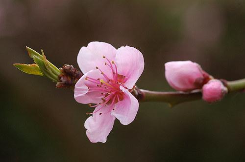 Kvetoucí větvička