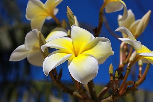 Kouzelný květ
