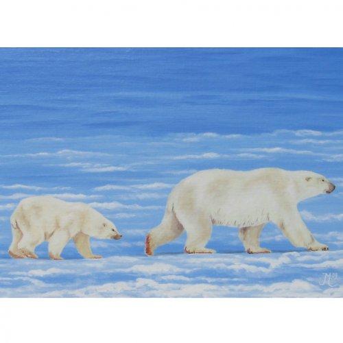 MOŘE XV. - Lední medvědi