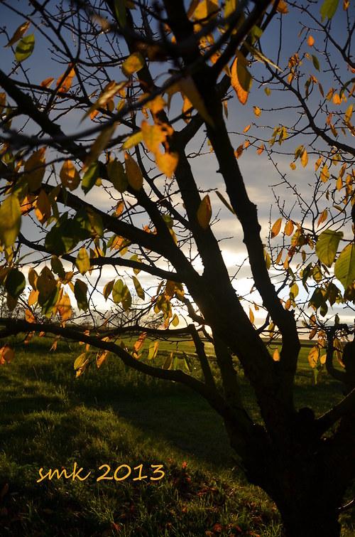 Podzim IV - autorská fotografie