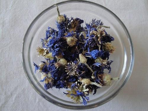 Chrpový květ s kalichem