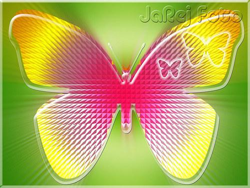 Pestrý motýl