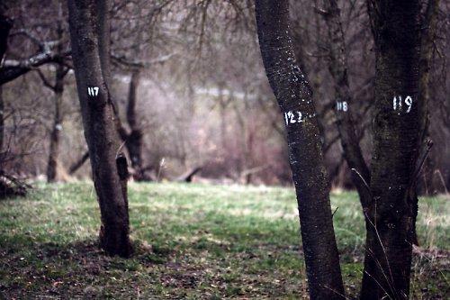 Stromy s jmény