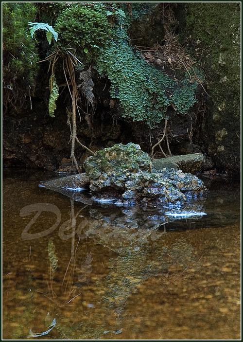 Vodní zahrada - A4