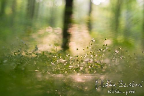 Lesní sen, foto-plakát