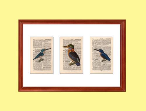 Sada 3 tisků na listy starého slovníku z roku 1856