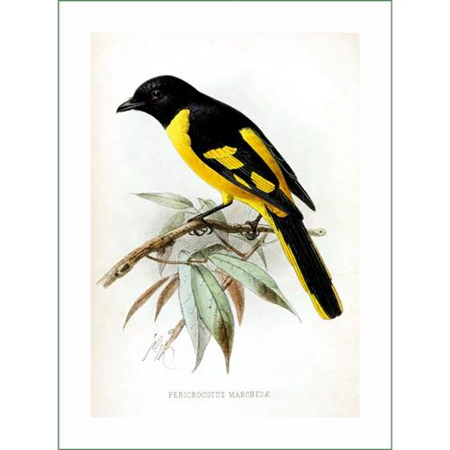 ptáček (17) - J.G.Keulemans  (látkový panel)