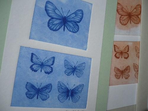 Blahopřání- motýl