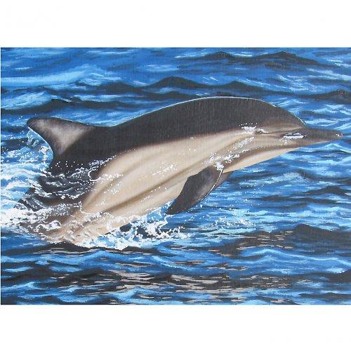 MOŘE VIII. - Delfín