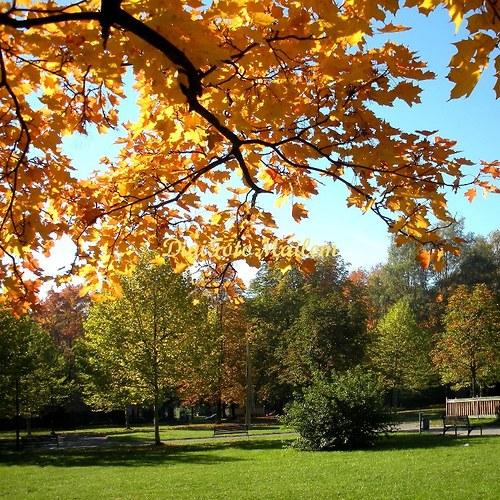 Krásný podzim I