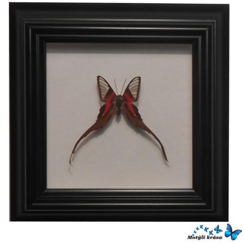 Velmi zvláštní motýlek