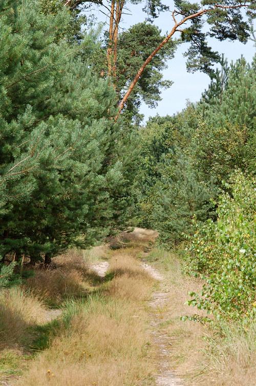 Cestou lesem na Hlavenec