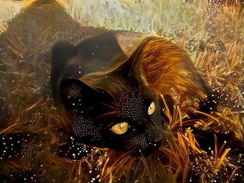 Divoká kočka - autorská fotografie s efekty