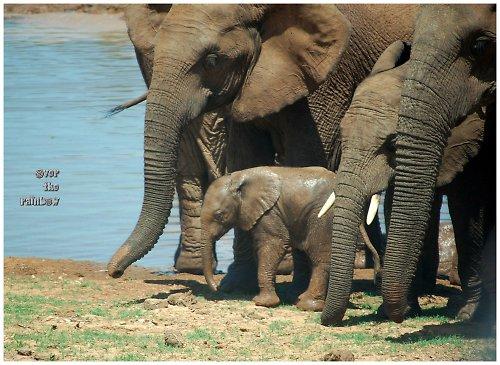 Sloní rodinka - autorská fotografie
