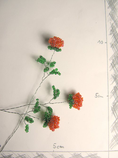 Růže korálková oranžová