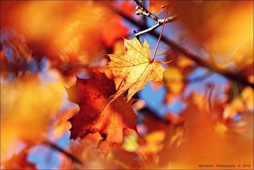 Autumn Harmony I