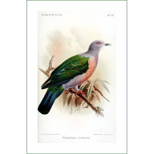 ptáček (19) - J.G.Keulemans  (látkový panel)