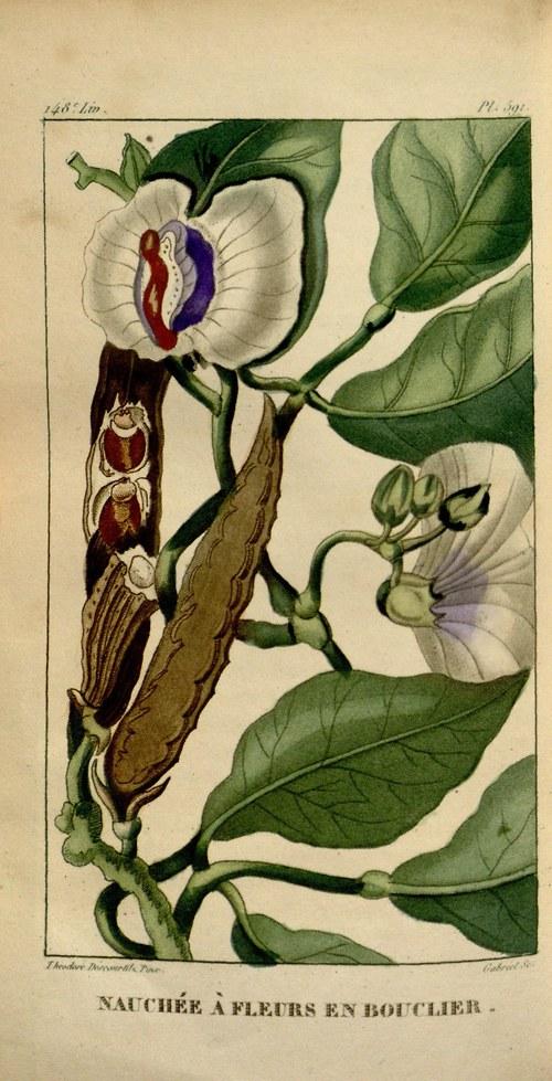 Botanika II