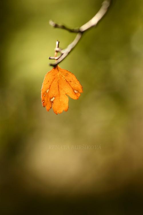 Oranžáda - autorská fotografie A4