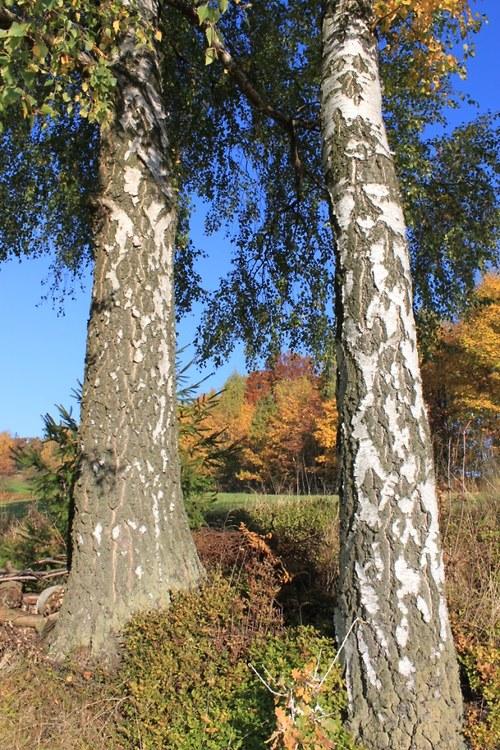 Vstříc podzimu ve dvou