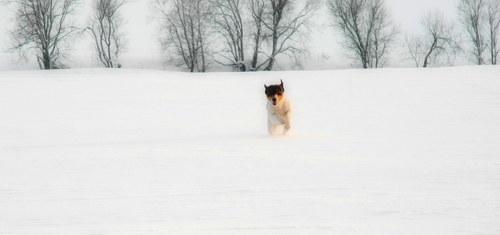 Na sněhu ...