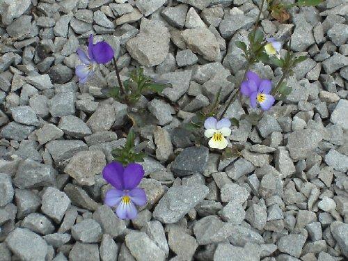 Jaro na hrázi přehrady