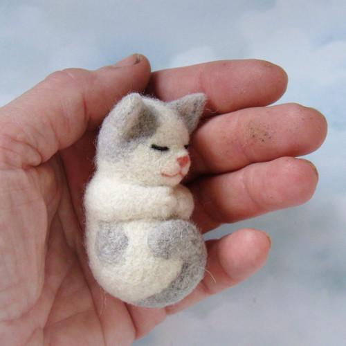 Koťátko do dlaně