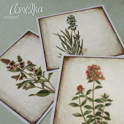 Nažehlovačky z Botanického atlasu - sada 5