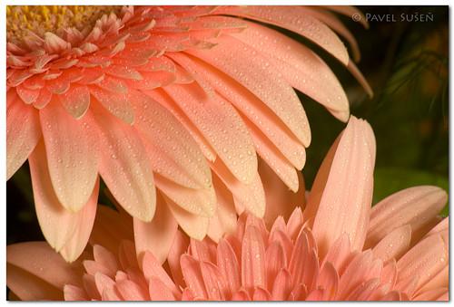 Krása květin II.